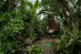 Olivia Garden gotowe na przyjęcie zwiedzających. Egzotyczny gąszcz u podnóża oliwskich wieżowców