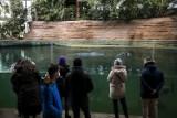 """Warszawskie ZOO. Ważny apel pracowników ogrodu zoologicznego. """"Ludzie karmią zwierzęta cukierkami i lodami"""""""
