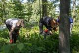 Uporządkowali nieczynny wiejski stary cmentarz ewangelicko-augsburski w Pawłowej na terenie gminy Zelów w powiecie bełchatowskim