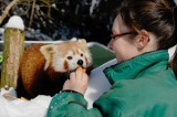 Ekskluzywne spotkania ze zwierzętami w Zoo Görlitz. Rendez-Vous życia