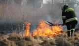 Groźba utraty życia, grzywna i  odebranie dopłat do produkcji rolnej. Lepiej nie wypalać!