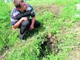 Żuławy: Koalicja sołtysów przeciwko... bobrom