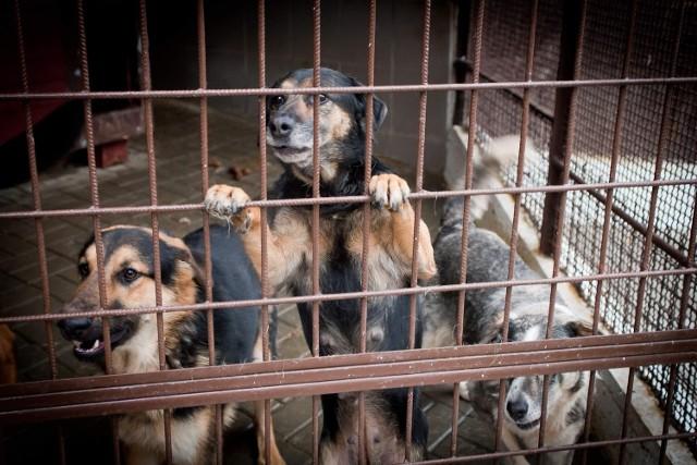 Od 1 stycznia nie będzie można trzymać psa na łańcuchu dłużej niż 12 godzin