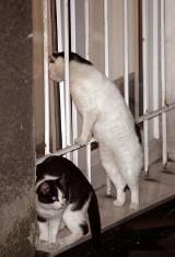 Koty i fretki do adopcji - w weekend w poznańskiej palmiarni