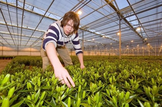 Zbiór owoców to jedna z niewielu propozycji pracy dla młodych.