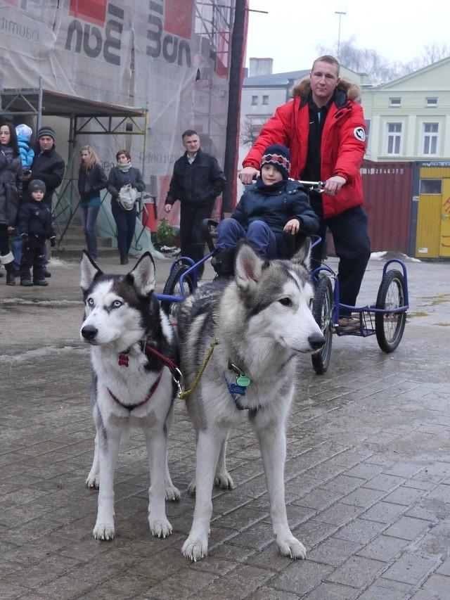 W czasie jarmarku świątecznego w Swarzędzu można było przejechać się psim zaprzęgiem.