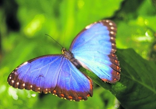 Motylarnia w nowym zoo będzie otwarta dla zwiedzających przez całe lato