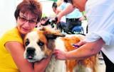 Konin: Miasto nie ma pieniędzy na chipy dla psów