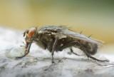 Gąsienica i mucha na obiad? Belgia dopuszcza owady do spożycia
