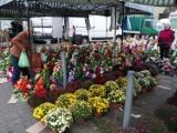 Na targu w Chodzieży: znicze i ozdoby nagrobne, kwiaty, warzywa i owoce