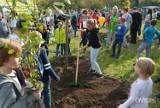 Posadzą 3 tysiące drzew! Święto Drzewa już w niedzielę