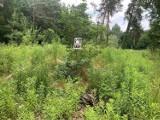 Tabliczki z wulgarnym określeniem osób śmiecących pojawiły się w lasach gminy Koluszki. Kto je zamontował?