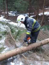 Wichura w powiecie cieszyńskim: prawie czterdzieści zgłoszeń, połamane drzewa i zerwane dachówki