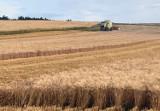 Powiat chełmski. Żniwa w pełni. Rolnicy czekają na skup żyta w firmie Elewarr
