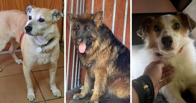 W likwidowanym schronisku dla bezdomnych zwierząt zostały tylko cztery psy. Pomóż znaleźć im nowy dom.   Zobacz kolejne zdjęcia. Przesuń zdjęcia w prawo - wciśnij strzałkę lub przycisk NASTĘPNE
