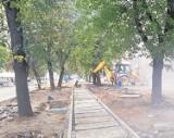 KROTOSZYN: Remont Alei w mieście trwa. Co z drzewami?