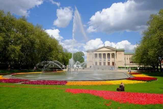 Miliony tulipanów przed Operą