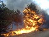 Przypominamy, że wypalanie traw jest procederem nielegalnym!