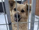 Nowy Sącz. Psy z sądeckiego schroniska znalazły ciepły kąt na czas mrozów. Część z nich zyskała w ten sposób nowy dom [ZDJĘCIA]