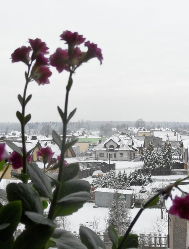 Zima w Tychach