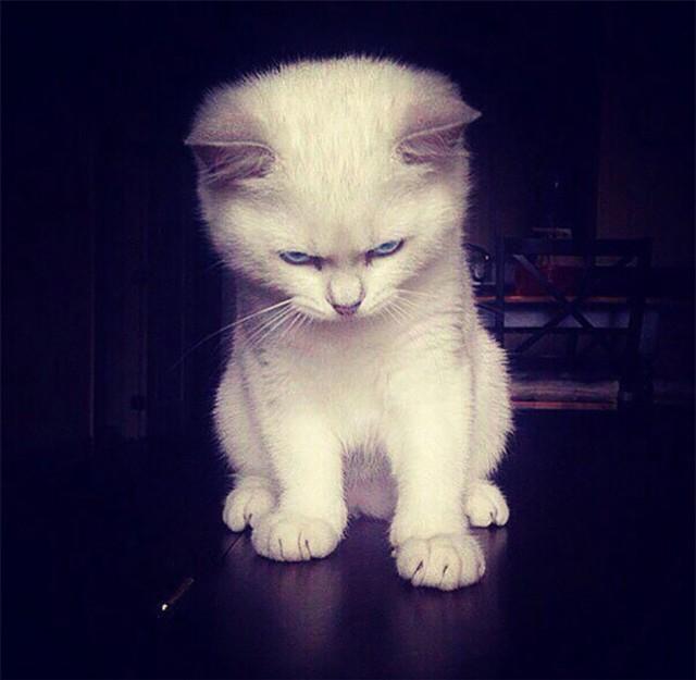 Te koty w poprzednim wcieleniu były drapieżnikami. Oto słodka postać zła! [ZDJĘCIA]