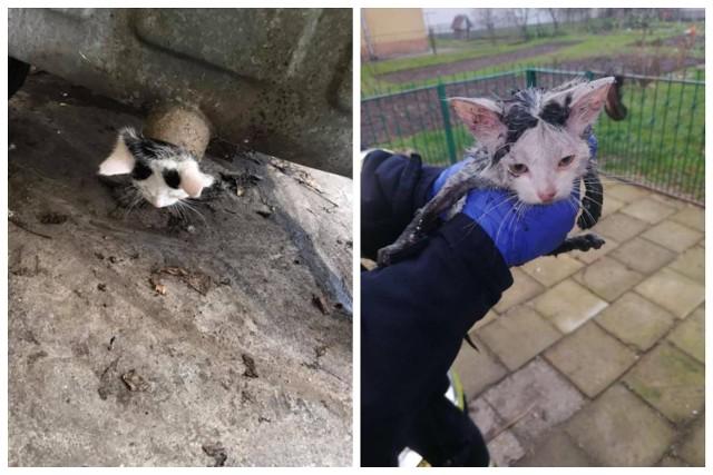 Strażacy z OSP Knyszyn uratowali kota, który utknął w rurze