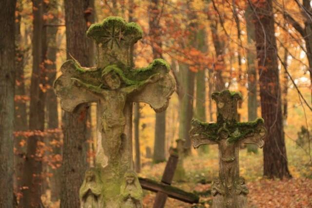 Cmentarz w nieistniejącej wsi Sieniawka w Nadleśnictwie Lubaczów