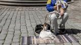 Kozy wykorzystywane do żebrania? Niepokojące sygnały z poznańskiego Starego Rynku