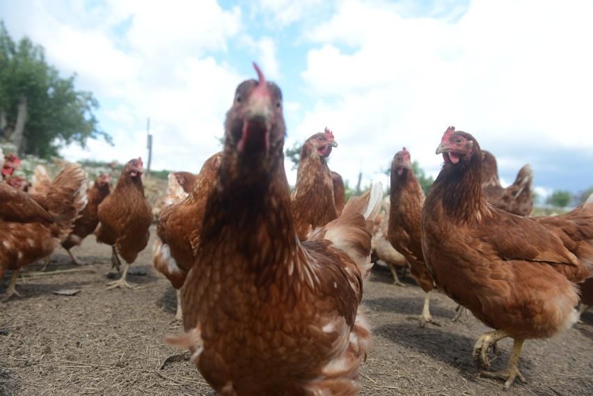 Ile kosztują świąteczne jaja : ekologiczne, wiejskie, klatkowe? Jak zmieniły się ceny?