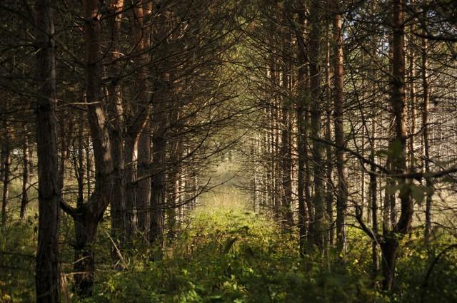 Grzybiarze znaleźli w lesie prawdopodobnie ludzkie szczątki