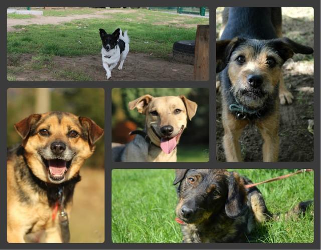 W sprawie adopcji można kontaktować się ze Schroniskiem dla Zwierząt w Bydgoszczy pod numerem telefonu  512 28 28 53 oraz drogą mailową: adopcje@schronisko.org.pl.  Poznajcie psy marzące o nowym domu.