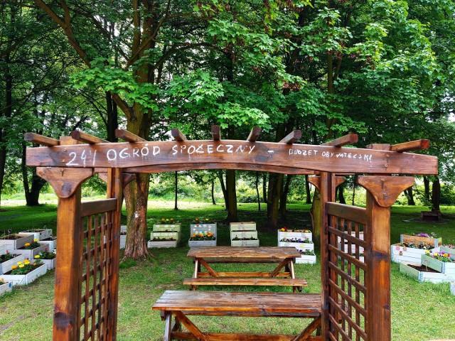 Pod koniec maja w Chorzowie Batorym powstał ogród społeczny. Jest to zielona inicjatywa jednej z mieszkanek. Jak wygląda taki ogród? Zobacz naszą galerię.