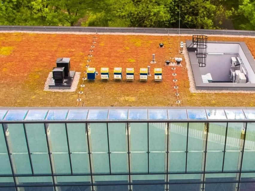 Inicjatywa postawienia uli na dachu Domu Zdrojowego...