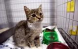 Koty do adopcji czekają na Was w Schronisku dla Bezdomnych Zwierząt w Sosnowcu - Milowicach ZDJĘCIA