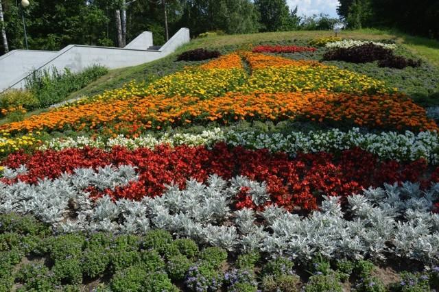 Teraz na wzgórku w parku miejskim kwitnie żaglówka.