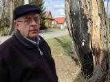 Grube drzewo grozi upadkiem na drogę i chodnik, może też uszkodzić remizę. Sołtys Jan Rączka walczy o jego wycięcie