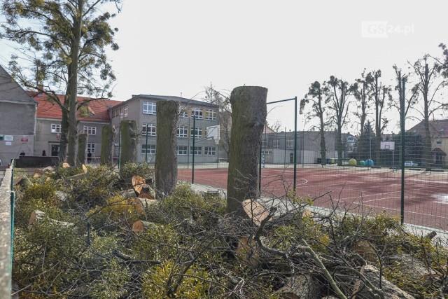 Kontrowersyjna wycinka drzew przy ul. Reymonta w Szczecinie
