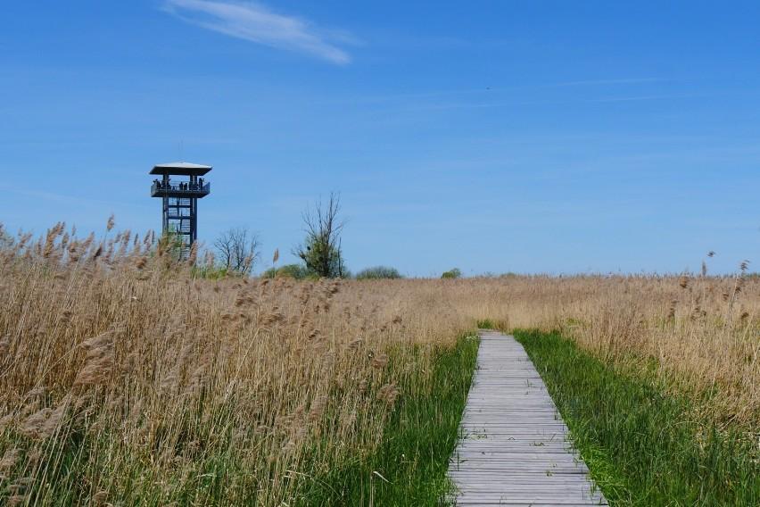 Pomysł na weekend: Stawy Przemkowskie z wieżą widokową na Dolnym Śląsku. Idealne miejsce na szybką wycieczkę! [JAK DOJECHAĆ, ZDJĘCIA]