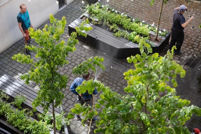 Ogród społeczny na terenie krakowskiego magistratu