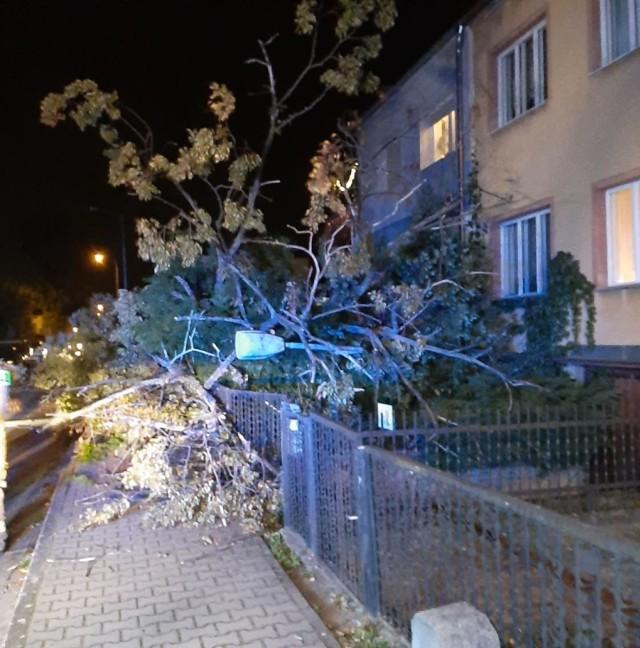 Powalone drzewo zniszczyło parkany dwóch posesji i uliczną lampę.