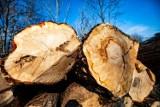 Zielona Fala alarmuje: 20 tys. drzew na Stogach pójdzie do wycinki! Miasto tłumaczy: To tereny inwestycyjne. Będą nasadzenia zastępcze