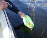 Jezioro Wierzchowo koło Szczecinka zarybione szczupakiem [zdjęcia]