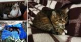 Dzisiaj jest Światowy Dzień Kota. Oto zdjęcia cudownych kociaków naszych czytelników