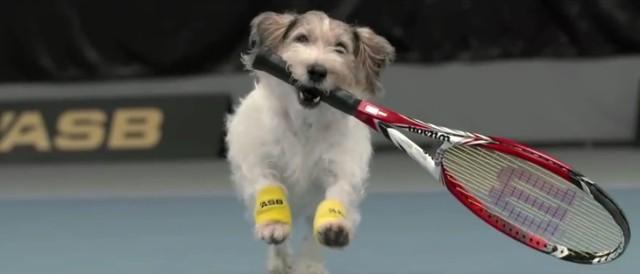 To najlepsi psi pomocnicy na świecie