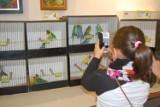 Wystawa ptaków egzotycznych w Soleckim Centrum Kultury
