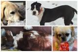 Sądeczanie kochają psy. Tak wyglądają ulubieńcy naszych Czytelników [ZDJĘCIA]