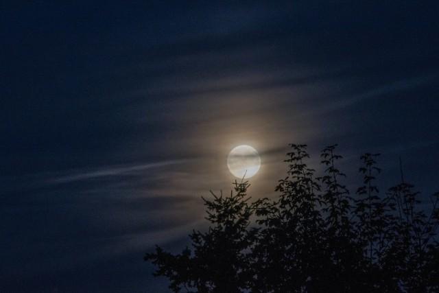 We wrześniu jest do wykonania sporo prac w ogrodzie. Oto kalendarz księżycowy na ten miesiąc.