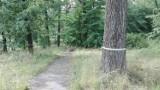 Setki tanich tui... w zamian za drzewa wycięte przy Parku Śląskim