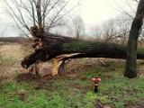 Połamane drzewa i uszkodzone dachy. Wiatr sieje spustoszenie w regionie