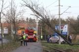 Drzewo spadło na trakcję tramwajową na pętli Park Południowy we Wrocławiu
